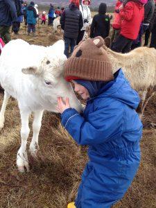 Adopted reindeer